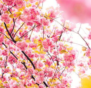 Sveiciens Pavasarī